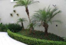 palmeiras p. jardins e nome