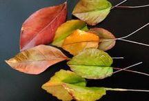hojas de todo tipo