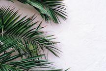 ~Palm Trees~