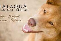 Animal Rescue/Adoptions