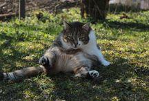 Haus- und Hoftiere / Hunde, Katzen, Hühner oder kleine Mäuse. Alles tierische, was so auf dem Hof herumwuselt, findet hier einen Platz