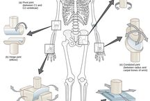 barbucha - joints & constructions