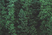 FOREST GREEN / Note: Please click on the first picture to see it because I changed the color levels on Photoshop.   The color is called Forest Green which symbolizes tranquility, nature and calming. Green, by nature, is the most calming of all the colors on the color wheel. In my culture, it also symbolizes nature and calming. In nature, there are two specific colors exist; green and blue.