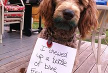 Dogs, signs...