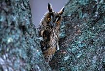 owls / Owls / by Lynne Miller