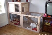 cage pipin