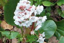 Shade Garden / New plants for shade garden under flowering plum tree.