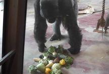 Correct Feeding of Primates