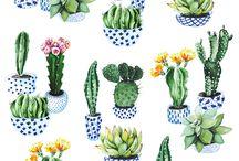 Illustration botanique - Plantes grasses / Inspiration pour Illustration botanique - Plantes grasses