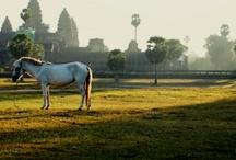 Impromptu Cambodia~