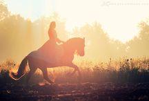 Equestrian session