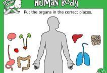 Work human body