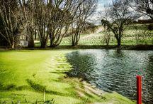 Golf Green & Swing