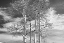 Ennenvanhaan/mustavalko kuvia