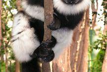 Madagasca...Sì viaggiare...! / Madagascar...luna di miele straordinaria!