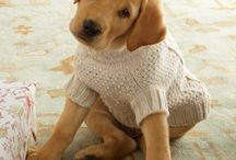 Clothes for animals