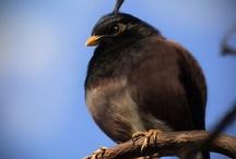 angry birds / by Antonio Trujillo