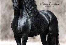 Equitation chevaux