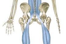 ryggmuskel