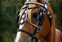ANIMALS | Horses / #andalusian #appaloosa #hanoverian #mustang #quarterhorse #roan