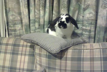 Usagi-chan / My bunny named Fluffy.