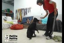 VIDEOS Demostración - Cursos  / Cursos de Agility,  Obediencia y Problemas de conducta (comportamiento)