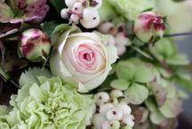 Flowers / by Georgina Daish-Gorge