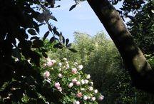 Garden / Life began in a Garden ....