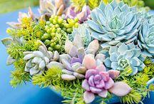 Superb Succulents!