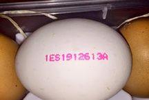 Etiquetatge dels ous
