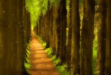 Tree Lined Path / A Shady, Quiet Walk Does A Body Good / by Pat Christopherson