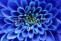 blue photoshoot