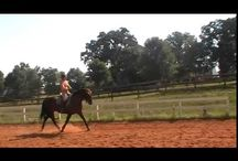 Floating trot.  Adding activity