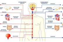Nervo Vago-The Vagus Nerve