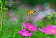 cosmo in fiore