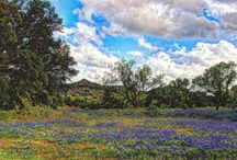 The Great State of Texas / by Linda Cardenas