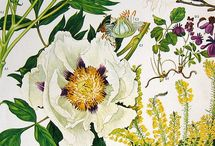 Botanical Prints & Illustrations