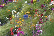 Secret garden showcase