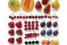 Ingredienti e stagioni - Infografiche   Ingredients and seasons - Infographics / Infografiche per gli appassionati digital!