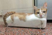 Amantes de gatos