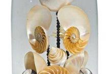 Coquillages globe