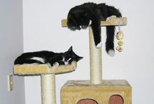 Cute Cats / Pictures of cute cats