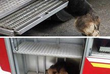 Heroic animals / Heroic story's that will make you want to cry.
