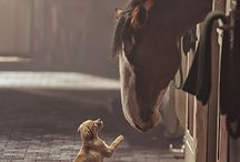 horses / by Donna Owens