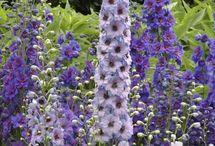 Flower Garden '16