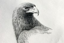 tekeningen dieren