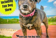 Morgan's Summer Fun Dog Show 2017