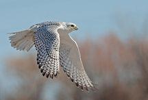Birds of Prey / by Kerry Gunnarson
