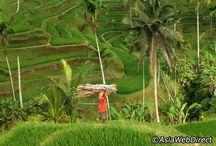 Bali sights