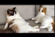 cat/dog